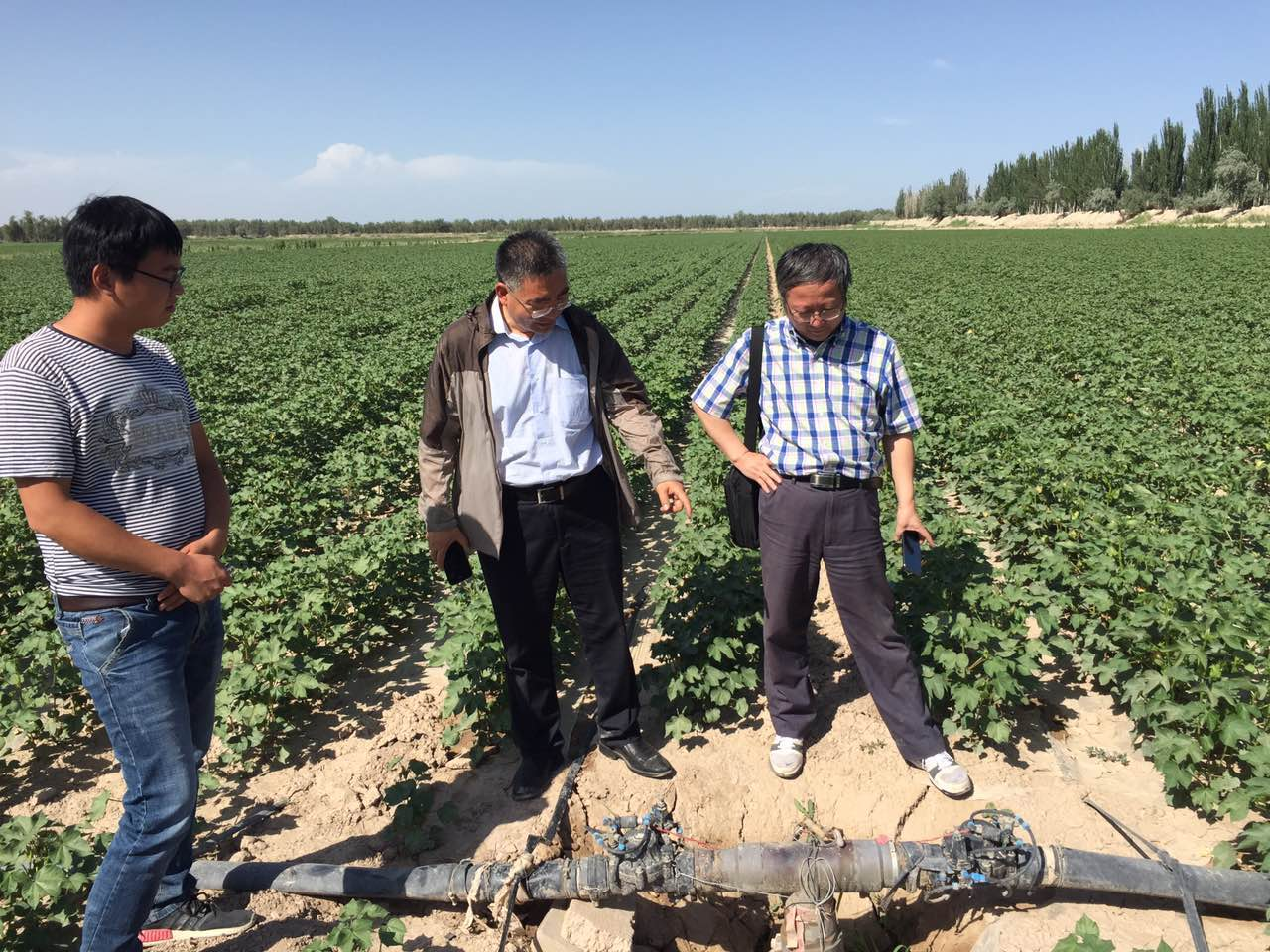 Xinjiang Agriculture Project